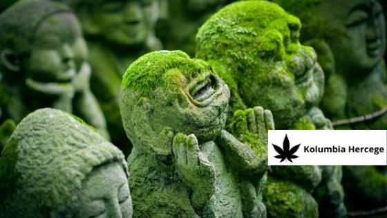 Orvosi Cannabis történelmi áttekintés