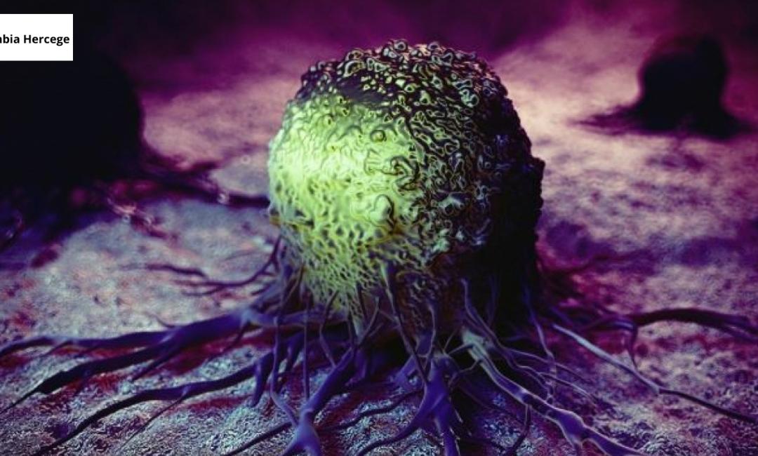CBD vs. Daganatos megbetegedések